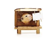 仓鼠在房子里 公告的标签 图库摄影