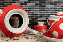 鼠坐里面红色茶壶在工作台面在厨房在房子里的特写镜头 免版税库存图片