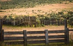 鼠尾草的老畜栏 库存照片