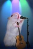 仓鼠当与话筒和吉他的音乐星在阶段 库存照片
