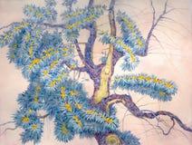 鼠李老结构树 库存图片