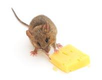 鼠标和干酪 免版税图库摄影