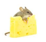 鼠标和干酪 库存照片