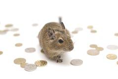 鼠标富有 免版税库存照片