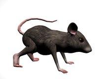 鼠标权利 免版税库存照片
