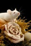 鼠标白色 免版税库存照片