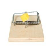 鼠标陷井用干酪 免版税库存照片