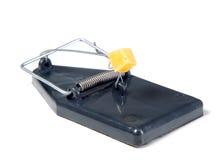 鼠标陷井用干酪 免版税库存图片
