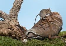 鼠标鞋子 库存照片