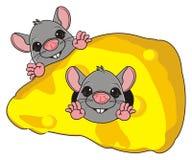 鼠的面孔 免版税库存照片