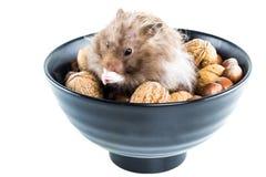 仓鼠(仓鼠属)与混杂的坚果 库存照片