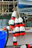 齿轮龙虾 免版税库存照片