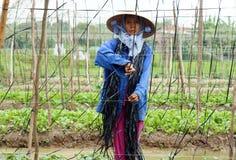 龙安,越南10月14日 库存图片