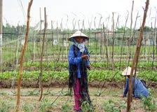 龙安,越南10月14日 图库摄影