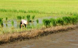 龙安,越南10月7日 免版税库存照片