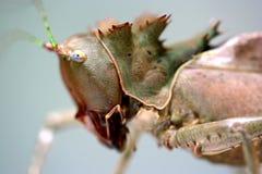 龙热带蚂蚱的雨林 库存图片