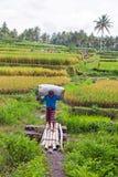 龙目岛,印度尼西亚- 2016年12月29日:土地的工作者在龙目岛印度尼西亚 图库摄影