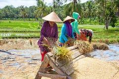 龙目岛,印度尼西亚- 2016年12月29日:土地的工作者在Lo 库存照片