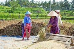 龙目岛,印度尼西亚- 2016年12月29日:土地的工作者在Lo 免版税库存图片