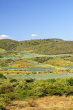 龙舌兰仙人掌领域横向墨西哥 图库摄影