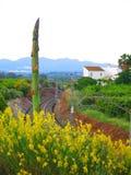 龙舌兰和农村铁路与黄色灌木 免版税库存图片