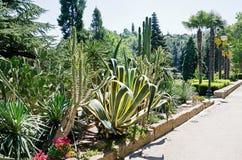 龙舌兰和仙人掌在公园 免版税库存图片