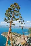 龙舌兰希腊nafplio结构树 免版税库存图片