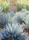 龙舌兰植物、棕榈和多汁植物在热带庭院里 免版税库存照片