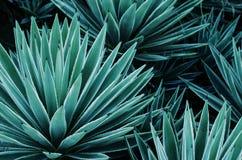 龙舌兰植物、棕榈和多汁植物在热带庭院里 免版税库存图片