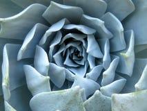 龙舌兰植物 免版税库存照片