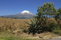 龙舌兰玉米前景多雪的火山 免版税库存照片