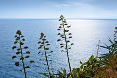 龙舌兰,从地中海岸,西班牙的仙人掌 免版税库存图片