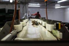 龙虾加工设备 库存照片