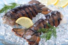 龙虾原始的尾标 库存图片