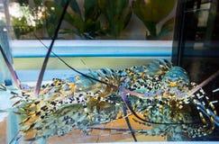 龙虾在海鲜餐馆 海鲜泰国 免版税库存图片