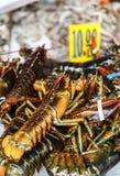 龙虾在纽约,被团结美国 库存照片