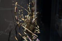 龙虾壳被取消入片断甲壳动物的海洋生物 图库摄影