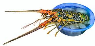 龙虾市场公卖 免版税图库摄影