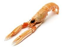 龙虾挪威 免版税库存图片