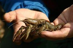 龙虾河 库存照片