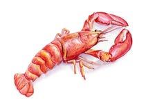 龙虾的水彩例证在白色背景的 免版税库存图片