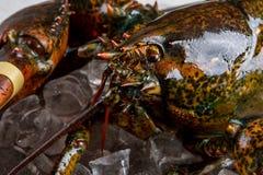 龙虾眼睛和嘴  免版税库存照片