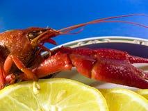 龙虾红色 免版税图库摄影