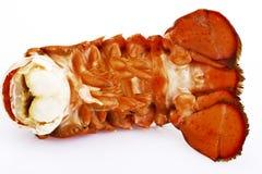 龙虾,特写镜头 免版税图库摄影