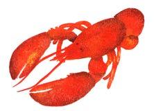 龙虾 在白色背景绘的水彩例证 库存图片