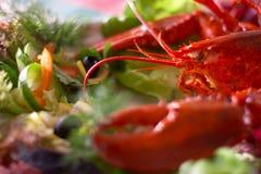 龙虾 免版税库存照片