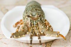龙虾 图库摄影