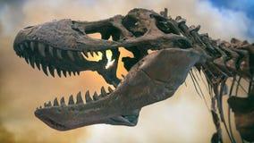 暴龙雷克斯恐龙化石烟 免版税库存图片