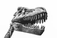 暴龙雷克斯恐龙现实模型  免版税图库摄影