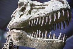 暴龙雷克斯恐龙现实模型  库存图片